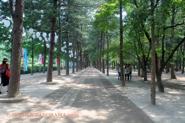 Korean Central Pine Tree Lane