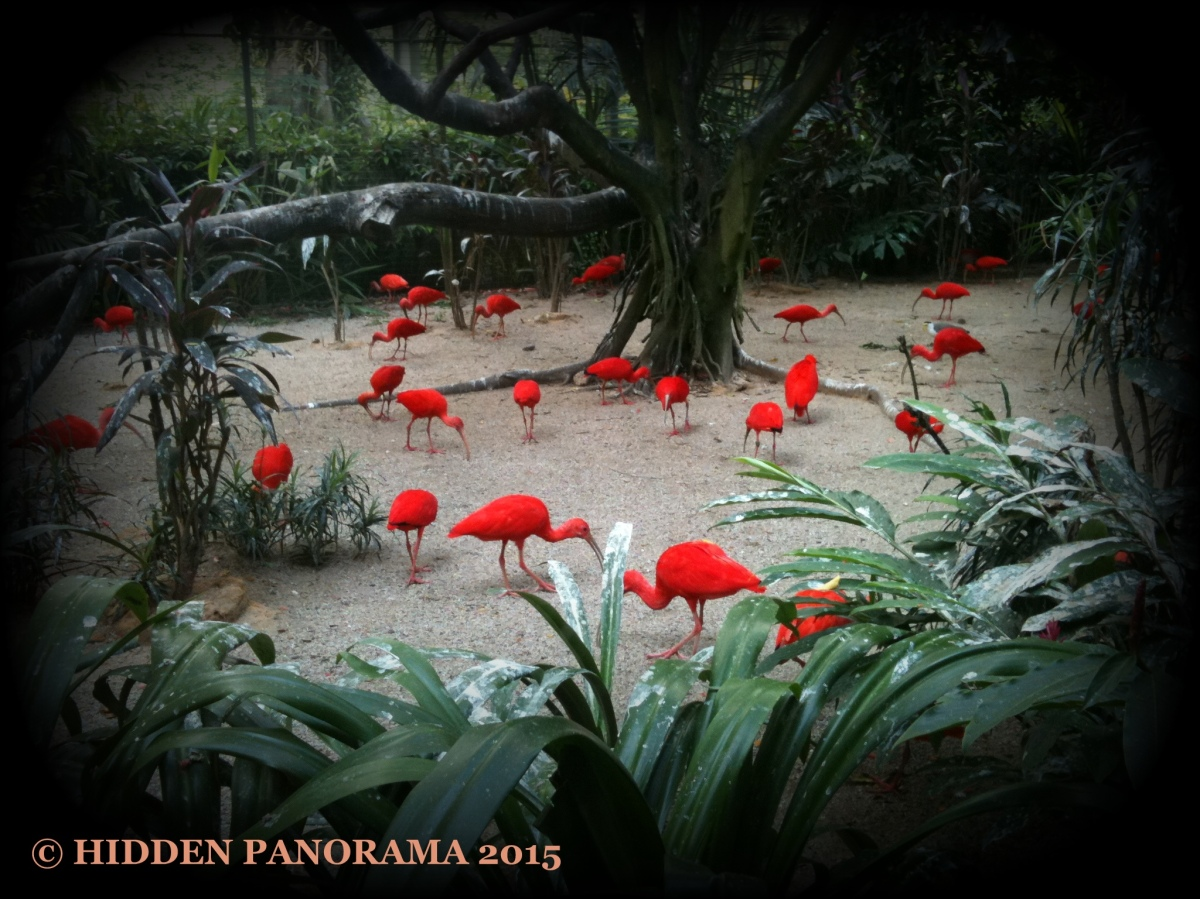 Life Of Others : Jurong Bird Park - Scarlet Ibis