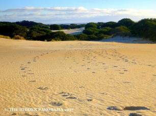 Tasmania (Day 2) : From Montezuma Falls to Strahan to Henty Dunes