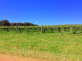 Stopover at Sandalford Winery